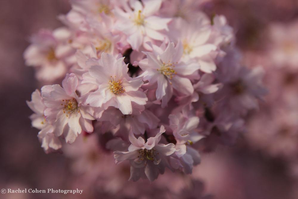 """Truly Delightful"" 3<br /> <br /> Flowers by Rachel Cohen"
