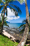 Coconut palms and blue Pacific waters at Hideaways Beach, Princeville, Island of Kauai, Hawaii