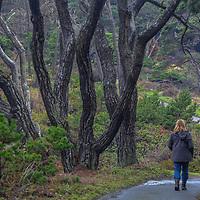 A hiker walks along a path in the Mendocino Coast Botanical Gardens in Fort Bragg, California.