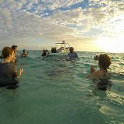 Interacting with Stingrays at Stingray City. Grand Cayman Island.