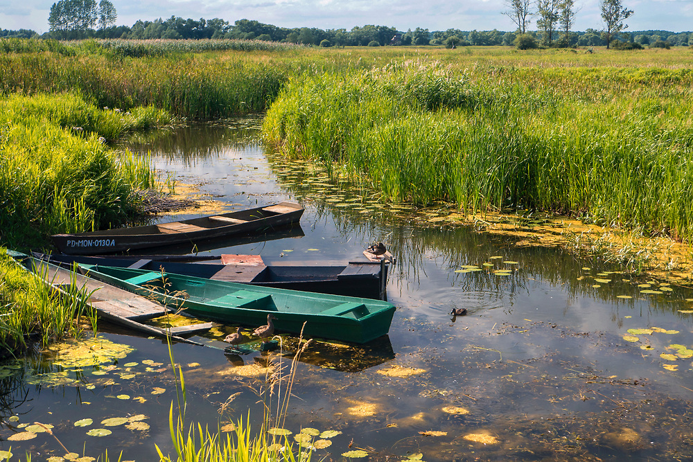 Rozlewiska Biebrzy, okolice Goniądza, Polska<br /> Biebrza floodplains, near Goniądz, Poland