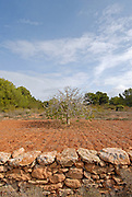 Travel Images of Formentera
