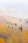 Forests surrounding Park City in Fall, Autumn, Utah, United States of America