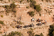 16 AUGUST 2009 -- GRAND CANYON NATIONAL PARK -- Tourists ride the mules into the Grand Canyon from the Bright Angel trail head. The mule rides are one of the most popular tourist attractions in the Grand Canyon. The South Rim of the Grand National Park near Tusayan.   PHOTO BY JACK KURTZ