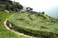 Small village in the area of Ping'an with a woman walking on a tiny path. Guangxi, China, Asia