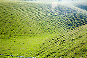 Terracettes on steep slopes in chalk dry valley caused by soil creep, Milk Hill,  Wiltshire, England, UK