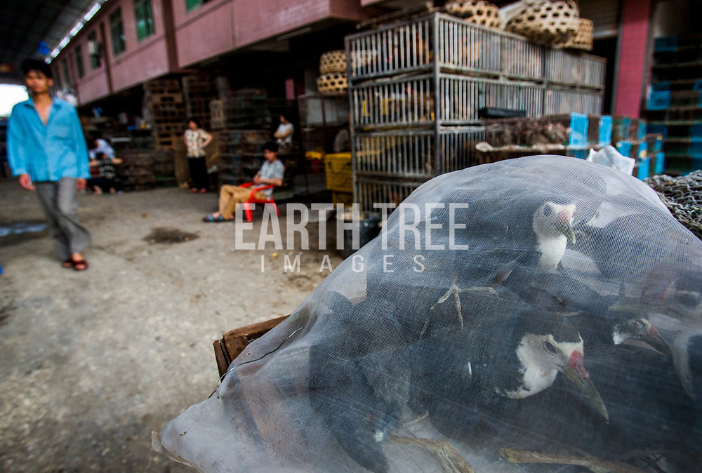 Millions are dogs are consumed every years across China, Vietnam, Indonesia and other parts of Asia. Their fur is also used across China as well. Guangzhou, China. Photo: Paul Hilton / Earth Tree Images