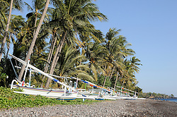 traditionelle Auslegerboote an Kiesstrand vor Kokospalmen, Cocos nucifera, traditional Outrigger-Canoes on tropical beach with Coconut Palms, Tulamben, Bali, Indonesien, Indopazifik, Indonesia, Asien, Indo-Pacific Ocean, Asia