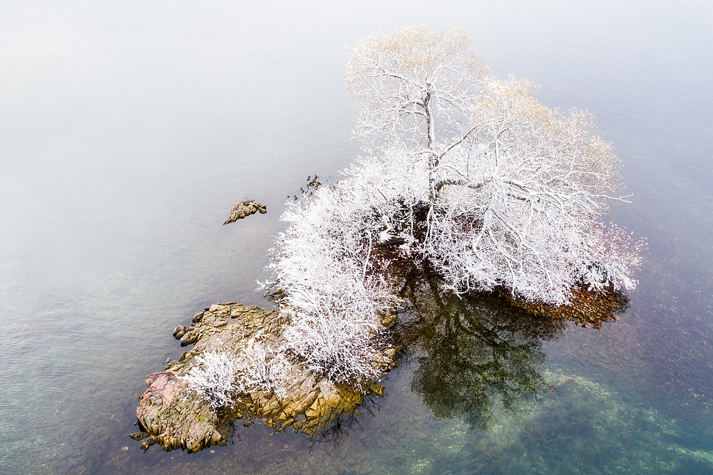https://Duncan.co/one-tree-on-small-island-with-fresh-snow
