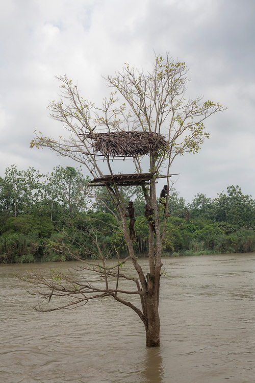 Kids play in a tree in the Keram River in the village of Yar, East Sepik Province, Papua New Guinea.<br /><br />(June 23, 2019)