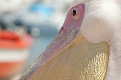 pelican's face outdoors
