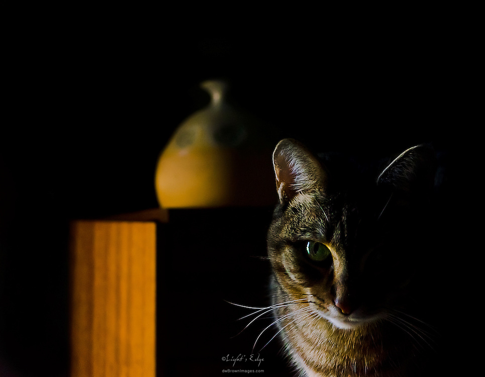 A candid portrait of one of my cats sitting near a window as the sun was setting on a winter's day.