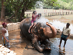 Tourists on elephant being showered with water, Goa.