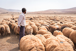 6 October 2018, Jordan Valley, West Bank, Occupied Palestinian Territories: 40-year-old Deab Abu Malik herds his sheep in the Jordan Valley on the West Bank. Deab looks on as an Israeli settler drives by on a motorbike, wondering if they will stop to raise dust over the Bedouins' presence. Ecumenical Accompaniers from the World Council of Churches Ecumenical Accompaniment Programme in Palestine in Israel accompany shepherds in many parts of the West Bank, providing an international presence known to have a mitigating effect on confrontations between Israeli settlers and the Palestinians. EAs' presence also helps Palestinians access lands they otherwise might not have dared to continue to cultivate. In the West Bank's Area C, any land that isn't cultivated for a period of three years becomes property of the state, the shepherds explain, so accessing their lands regularly is vital for the communities and their herds.