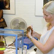 NLD/Naarden/20060917 - Open dag bij de egel en eekhoorn opvang Naarden