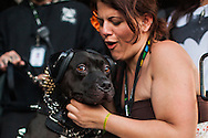 While the band Falling In Reverse played the Vans Warped Tour, a dog watched while wearing protective headphones. Photographer Chelsea Lauren pets the dog.