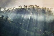 Adam's Peak Tea Trails Sri Lanka