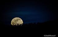 Blood Wolf Super Moon January 2019