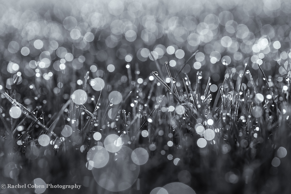 """""""Refreshing"""" mono<br /> <br /> Beautiful dancing lights in this magical monochrome nature abstract!"""