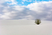 Yucca and gypsum dunes of White Sands National Monument, New Mexico