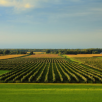 """""""Lewiston Summer Vineyards""""<br /> <br /> Scenic vineyards and farms of Lewiston NY. in the region of Niagara Falls.<br /> <br /> Landscapes by Rachel Cohen"""