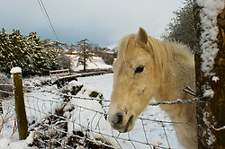 © Licensed to London News Pictures. 29/12/2020. Llanfihangel Nant Melan, Powys, Wales, UK. A white horse is seen in a winter landscape near Llanfihangel Nant Melan in Powys, Wales, UK. Photo credit: Graham M. Lawrence/LNP