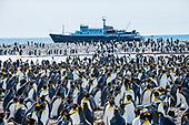 Arctic + Antarctica