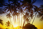 Sunset with cococnut palm trees, Hawaii