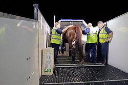 Exquis Nadine lead to the transport container by groom Vanesa Ruiter<br /> Alltech FEI World Equestrian Games - Kentucky 2010<br /> © Dirk Caremans