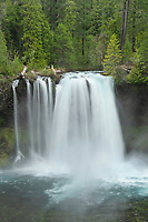 Koosah Falls of the McKenzie River, Cascade Range Oregon