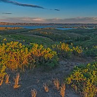Greasewood bushes grow above the Fort Peck Reservoir in the Missouri River Breaks and Charles M. Russel National Wildlife Refuge, Montana.