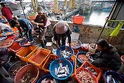 During an afternoon downpour, sellers help shoppers select crabs, shrimp, squid, and mackerel at a market in Daxi harbor, Taiwan. (From the book What I Eat: Around the World in 80 Diets.)