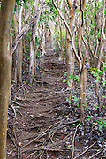A wild hiking trail In Hawaii can be dangerous if you don't watch your step.