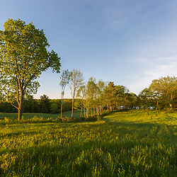 Trees on the edge of a hay field at Emery Farm in Durham, New Hampshire.
