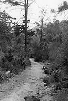 1973 A hiking path in Runyon Canyon