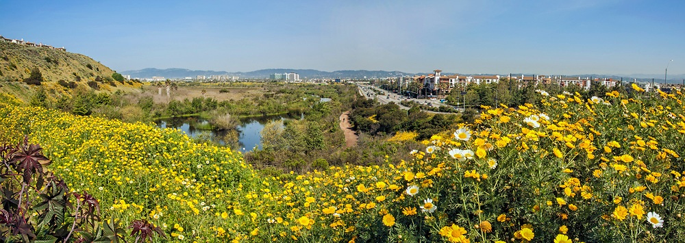 Ballona Wetlands and Playa Vista development, Los Angeles, California, USA