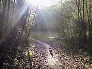 Nederland, Ubbergen, 22-10-2012Het was een dag met mooi herfstweer. Herfstbos. De hond, teckel, wordt uitgelaten.Foto: Flip Franssen/Hollandse Hoogte