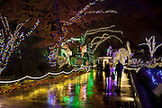 People walk under trees wrapped in Christmas lights during WildLights at the Woodland Park Zoo. This year's WildLights is open daily through Jan. 3. (BETTINA HANSEN/The Seattle Times)