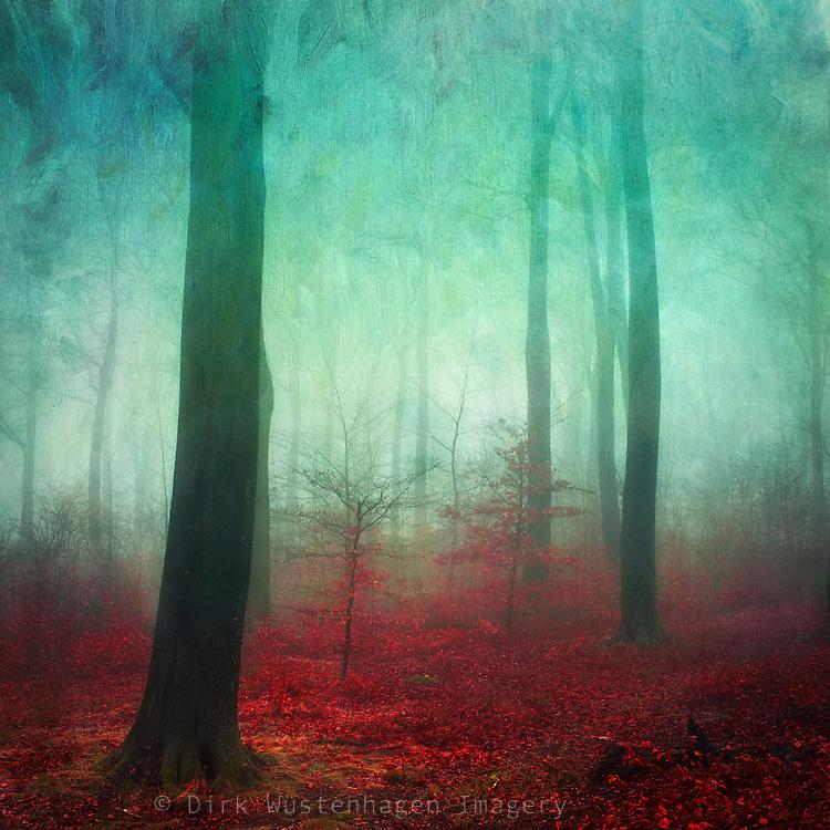 Painterly forest scenery on a misty November day.