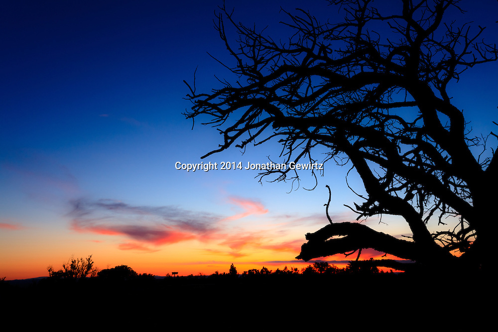 The setting sun silhouettes a scraggly tree on the high plateau northwest of Moab, Utah.<br /> WATERMARKS WILL NOT APPEAR ON PRINTS OR LICENSED IMAGES.