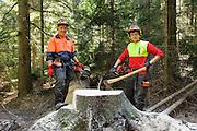Baumfällung, Waldbauern, Forstarbeit, Lamer Winkel, Bayerischer Wald, Bayern, Deutschland | tree cutting, forestry work, Lamer Winkel, Bavarian Forest, Bavaria, Germany