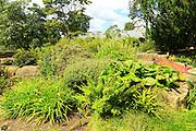 Plants in rockery area Kew Gardens, Royal Botanic Gardens, London, England, UK