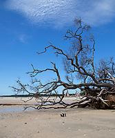 Botany Bay Plantation Heritage Preserve and Wildlife Management Area Edisto Island, South Carolina, United States of America Botany Bay Beach, Edisto Island photo by <br /> Catherine Brown