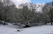 Dog walking in front of snow covered trees on Hampstead Heath, London