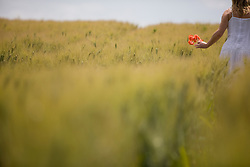 Back view of a woman walking in a field holding red poppies