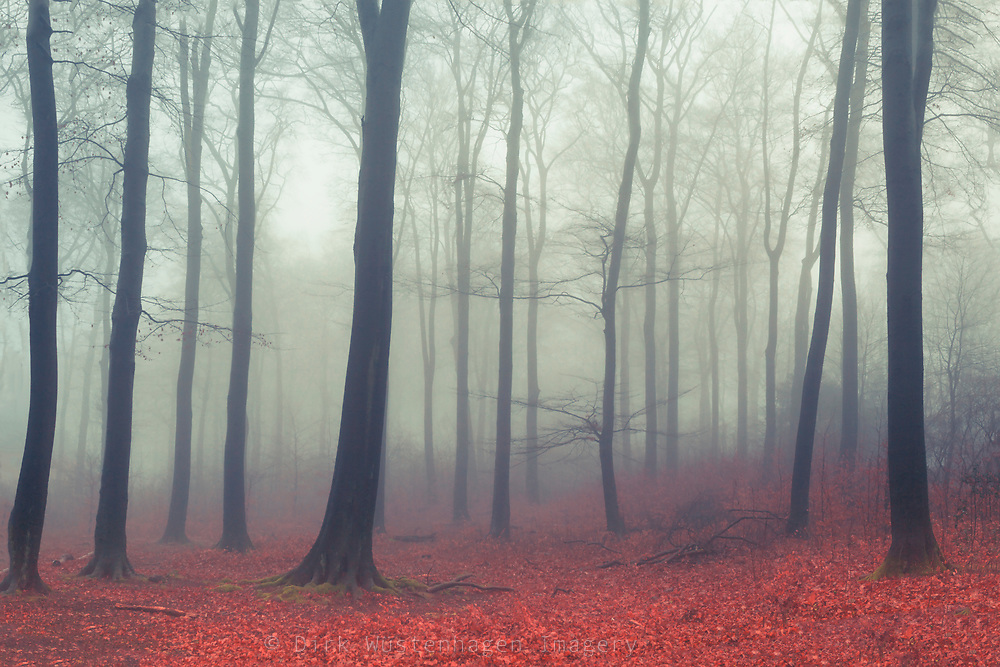 Forest on a misty and rainy late fall day<br /> Society6 products: https://society6.com/product/sound-of-fog_print<br /> Redbubble Prints: http://rdbl.co/2BKtDki