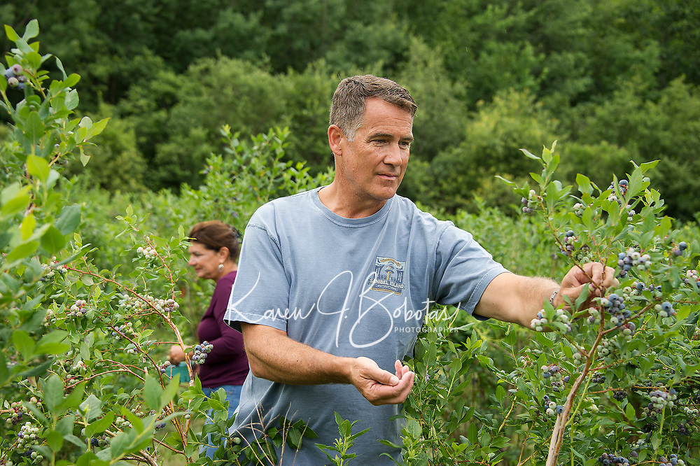 Roger and Pam Fink pick blueberries at Stone Brook Farm in Gilford over the weekend.  (Karen Bobotas/for the Laconia Daily Sun)