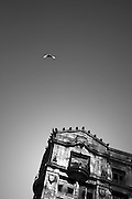 A backlit bird flies towards a historical stone building in downtown Seattle, Washington.