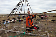 Bovanenkovo ,Yamal Peninsula, Russia, 09/07/2010..A Nenets woman, one of the tribe of indigenous nomadic reindeer herders, dismantles the family chum- or tent -  as they  leave their overnight camp on sledges heading north to the Russian Arctic coast.