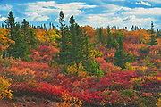 Autumn on the highlands by the Cabot Strait <br />Wreck Cove<br />Nova Scotia<br />Canada